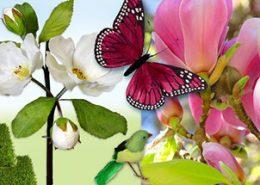 Flores, mariposas, pájaros y animales primaverales